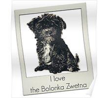 I love the Bolonka Zwetna Poster