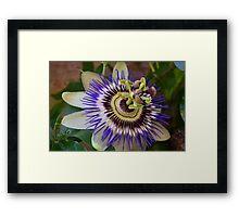 Bethlehem Flower Framed Print