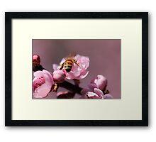 Beautiful blossoms Framed Print