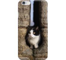 Stray kitten in Scottish castle iPhone Case/Skin