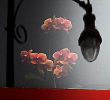 Moth Orchids Second Floor by Michael May