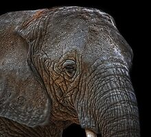 african giant by Jo-PinX