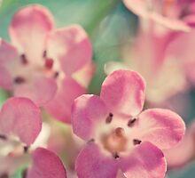 Pretty in pink by lightwanderer