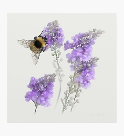 Watercolor Bumble Bee  Photographic Print
