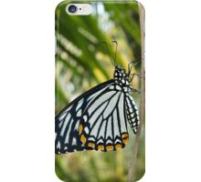 Common Mime iPhone Case/Skin