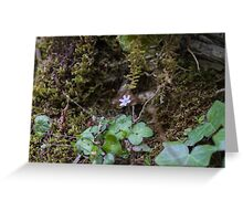 flowers in the rock Greeting Card