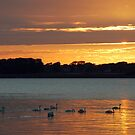 Swans on the way to their night's rest by Arie Koene