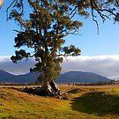 Cazneaux Tree, Wilpena Pound, South Australia, (Study #4), 2014. by johnrf