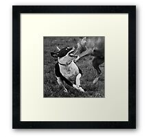 Dogs with game face on .12 Framed Print