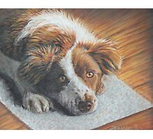 Dog Art - Portrait Painting of a Lovely Dog Photographic Print