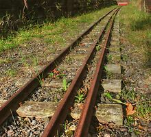 Follow the Tracks by Vicki Spindler (VHS Photography)