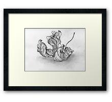 Dry Sycamore Leaf Framed Print