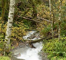 Tumbling Autumn Stream by Jim Stiles
