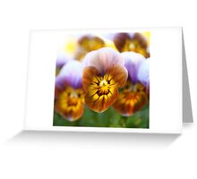 Rust-colored pansy - 2010 Greeting Card