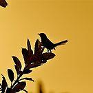 Sun-downer serenade by Karen01