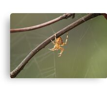 A Spiders Home Canvas Print
