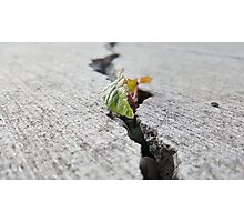Don't Give Up, Tree Photographic Print