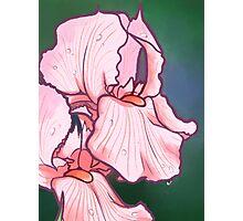 Iris Floral Design Photographic Print