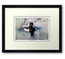 Ring-necked Ducks: Comrades Framed Print