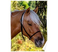Beautiful Palomino Enjoying Some Shade On A Hot Day Poster