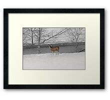 When Food Is Scarce Framed Print