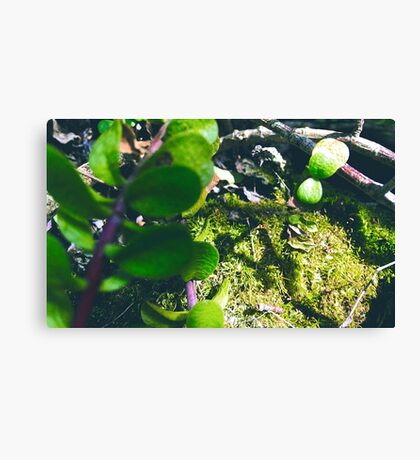 Succulent Sunshine Canvas Print