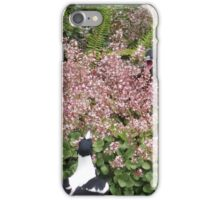 young magpie demanding food iPhone Case/Skin