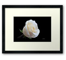 A rose from a rose Framed Print