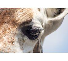 Giraffe eye close up Photographic Print