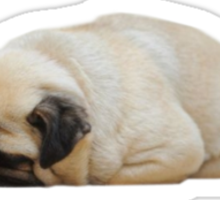 sleepy pug Sticker