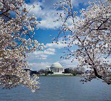 Thomas Jefferson Memorial with Cherry Blossoms by BravuraMedia