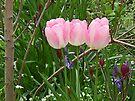 Pretty In Pink by lynn carter