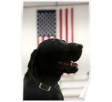All-American Black Labrador Poster