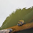 Turtle on the Log by WeeZie