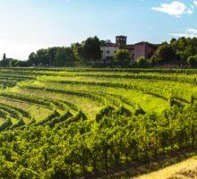 grapevine field in the italian countryside Sticker