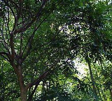 Trees, Roanoke River Basin by WeeZie