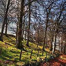 Platt Hill by Tom Gomez