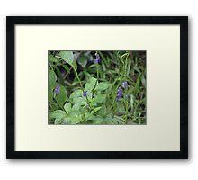 Purple sprinkled on green Framed Print