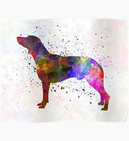 Polish Hunting Dog in watercolor Poster