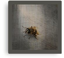Is there now a fly Canvas Print