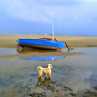 Tibetan Terrier out to Hilbre Island  by Debra Kurs