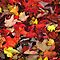 Gorgeous Canadian Autumn Leaves - NO TREES