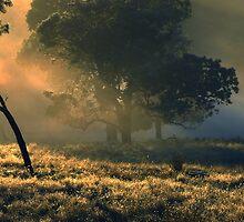 Sunrise at Westerway by Imi Koetz