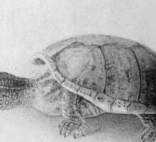 Black and White Turtle Sticker