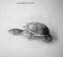 Black and White Turtle by BravuraMedia