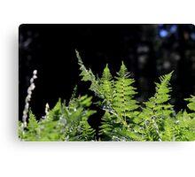 Glowing Ferns Canvas Print