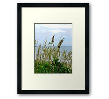 Dune Grass, Nags Head Framed Print
