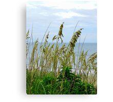 Dune Grass, Nags Head Canvas Print