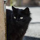 Black panther by AleFletcher