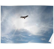 """""""Freebird""""... prints and products Poster"""